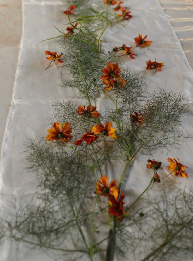 layout of coreopsis flower and wild fennel