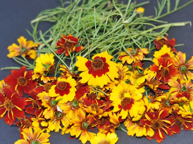 coreopsis flower and leaves