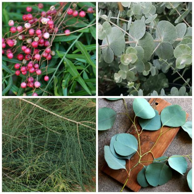 L-R: California pepper tree, eucalyptus cinerea, casuarina pines, and eucalyptus polyanthemos