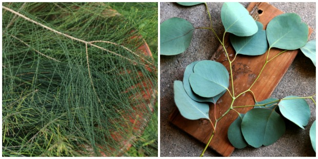 L-R: casuarina pines, eucalyptus polyanthemos